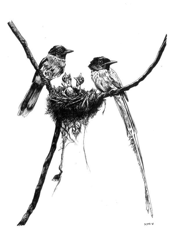 Bird Nest Feeding Chicks